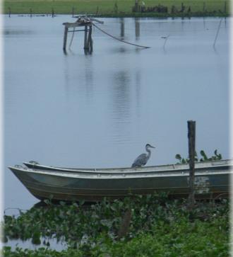 oiseau-bateaupti